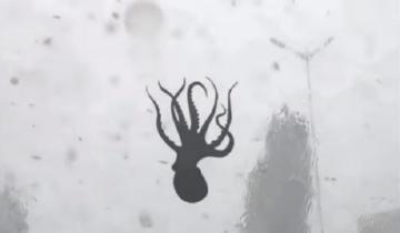 Жители Китая пережили шок, увидев, как с неба падают… осьминоги