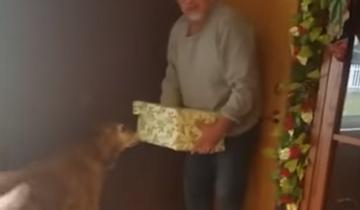 Какой подарок обрадует 12-летнего пса? (6 млн. просмотров)