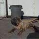 Волонтеры сделали все, чтоб спасти пса с пневмонией