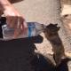 Страдая от жажды в жару, белочка обратилась за помощью к туристам