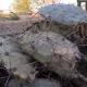 Ролик с верблюдом, поедающим кактус, собрал больше 6 млн. просмотров