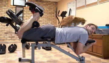 Жизнь с котами или как они нам «помогают»