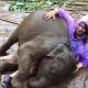 В Тайланде слонёнок устроил американской туристке грязевые ванны