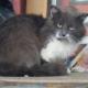 Возле мурлыки лежала записка: «Кота не спасать! Он сидит тут по важной причине»