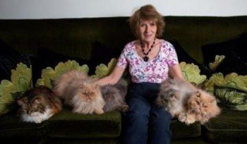 Муж пригрозил жене разводом, когда она завела 10 котов