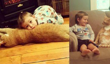 Рыжий кот, который был никому не нужен, стал ангелом-хранителем маленького мальчика…