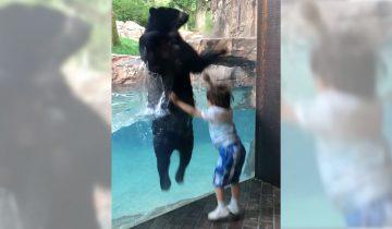 Медведь прыгает от радости вместе с мальчиком