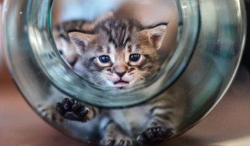 Котенок застрял в банке: что сделает мама