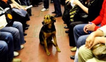 Пес проскользнул в вагон метро, и началось представление