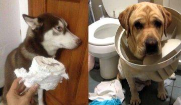 15 собак, застигнутых в разгар творимого непотребства. Стыдоба-то какая!