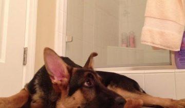Пес подпевает хозяину в ванной. Это надо слышать!