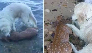 На прогулке пес неожиданно бросился в воду. И вернулся на берег уже не один