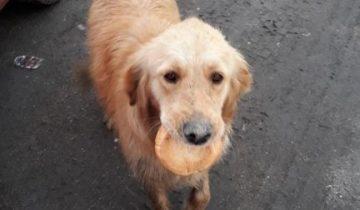 Пёс с засохшей булочкой во рту растопил сердца спасателей