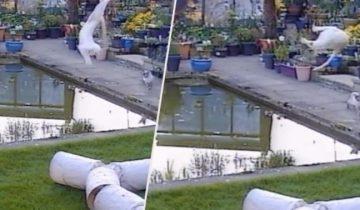 Феерический провал кота, пытавшегося поймать птицу
