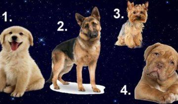 Выберите собаку и узнайте, какой мужчина идеально вам подходит