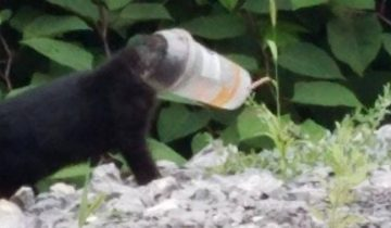 Котенок застрял в пластиковом стаканчике. Люди решили помочь ему!