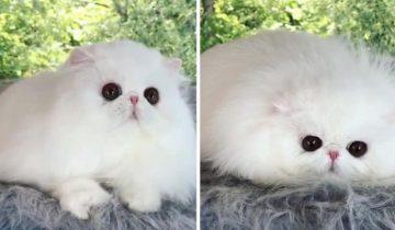 Котик, который любит превращаться в «пушистую кляксу»