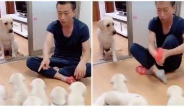Блогер начал «воспитывать» щенков на глазах мамы-собаки и вот чем это обернулось