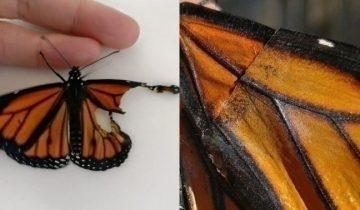 Дизайнер заменила бабочке порванное крыло и та полетела!