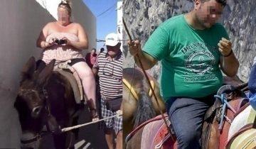 Несчастные ослики Санторини изнемогают под весом ожиревших туристов