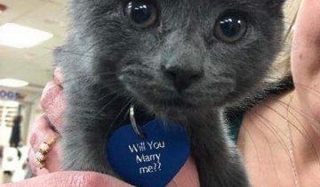 Милое предложение руки и сердца с помощью котенка