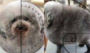 Японский грумер создал геометрически правильную собаку. Глаз не отвести!