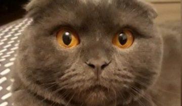 Хозяйка пригрозила коту поездкой к бабушке. Эту реакцию нужно видеть!