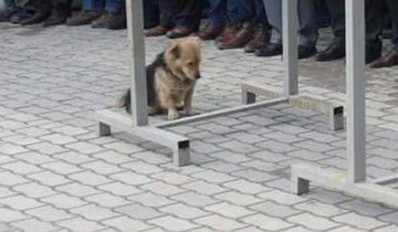 Он расплакался, когда понял, куда убегает его собачка каждое утро