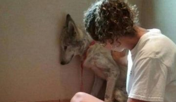 Люди бросали палки и камни в волка, который появился около их домов, чтобы попросить помощи!