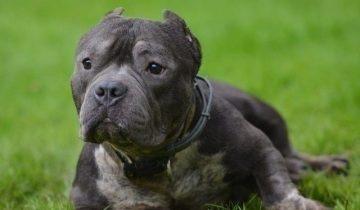 Несмотря на весь прошлый ужас, пес «Моржик» просто радуется жизни и новой семье
