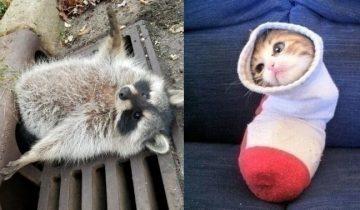 12 животных, которые оказались в странной ситуации и потому прославились