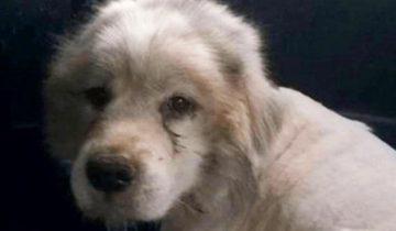 Он запер собаку на 7 лет в сарай…Когда волонтеры пришли его спасать, они онемели…