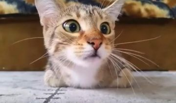 Кот, который смотрит фильм ужасов, стал звездой