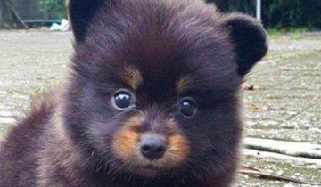 Семья думала, что завели собаку. Но когда она выросла, то оказалось, что это… медведь!