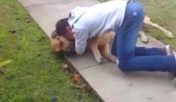 У мальчика пропал пес. Его искали 8 месяцев, но когда нашли, встреча была незабываемой!