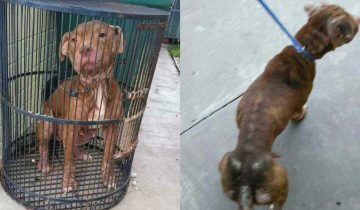Собаку посадили в птичью клетку и бросили на улице… Песик боялся даже пошевелиться