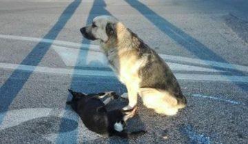 Дружба двух собак тронула сердца людей по всему миру