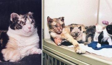 История кошки, спасавшей котят из пожара, потрясла весь мир