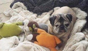 7 лет заводчик заставлял ее рожать щенков, и она уже просто не хотела жить!