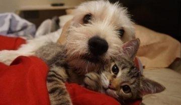Котенок с особыми потребностями обрел друга по прозвищу «Мистер Мама»