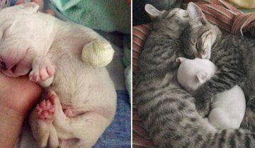 Щенка, которого искалечила его мать, спас дружный коллектив кошек и собак