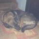 Пес спал под дверью квартиры, он просто стал не нужен хозяевам