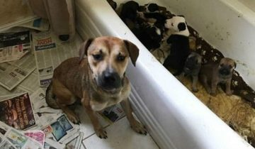 В этом доме полиция нашла более 100 замученных котов и собак!