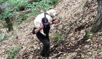 Парень нашел в ручье слепого старого лабрадора, а вознаграждение за него отдал в приют!