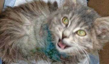 Маленький котенок бросался в ноги каждому встречному, мяукал и заглядывал в глаза…