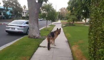 На прогулке хозяин подшутил над своей собакой. Ее реакция прекрасна!