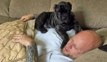 Мужчина вырастил самого огромного щенка в мире!