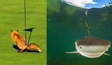 Забавные фотографии дикой природы. Вы такого точно не видели!