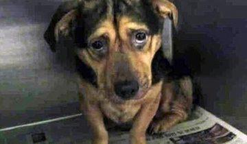 Самая грустная собака Калифорнии обрела новую семью