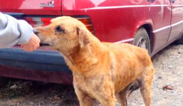 Они хотели забрать домой бездомную собаку, но она отказалась по очень важной причине!